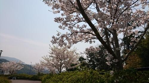 お花見_c0172049_10400584.jpg