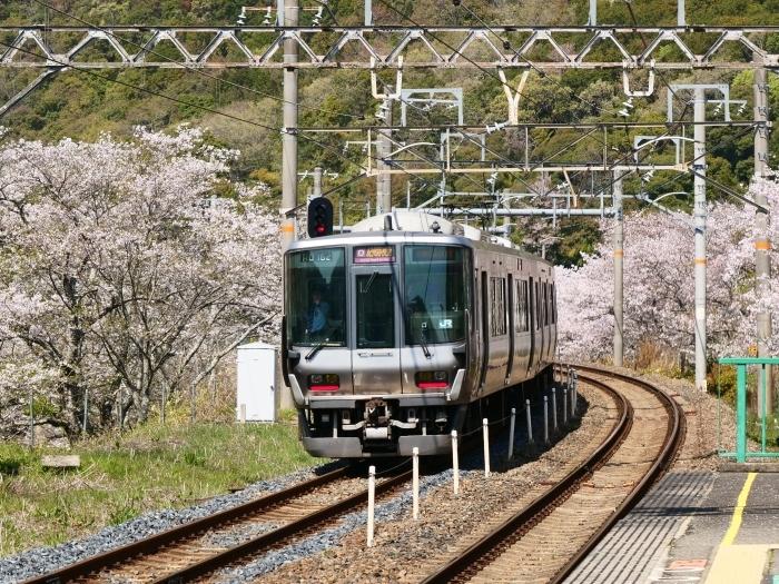 花と鉄道  2019-04-12 00:00   _b0093754_21555770.jpg