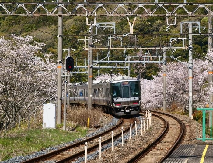 花と鉄道  2019-04-12 00:00   _b0093754_21561427.jpg
