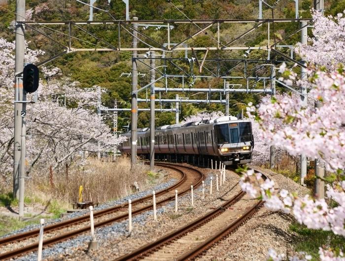 花と鉄道  2019-04-12 00:00   _b0093754_21564627.jpg