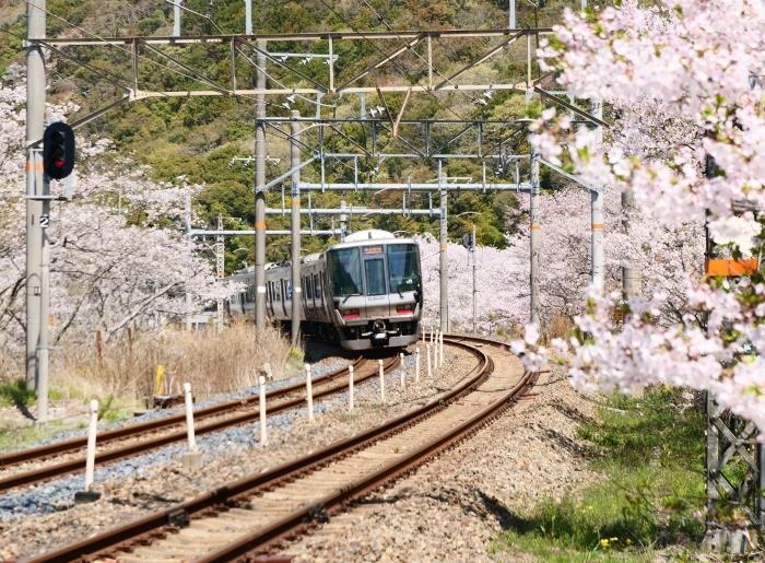 花と鉄道  2019-04-12 00:00   _b0093754_21575527.jpg