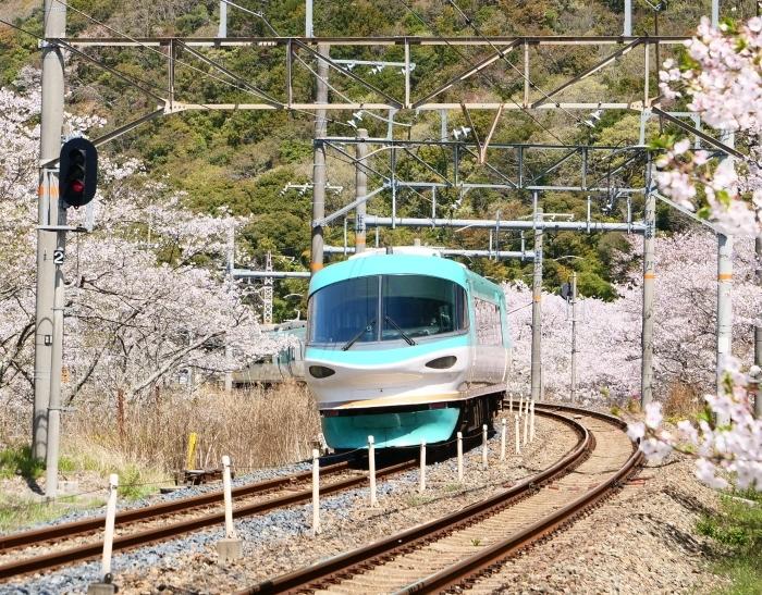 花と鉄道  2019-04-12 00:00   _b0093754_21582093.jpg