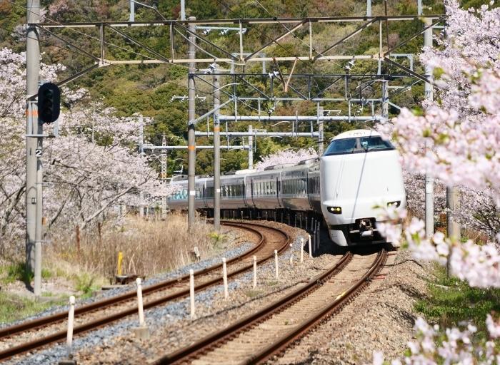 花と鉄道  2019-04-12 00:00   _b0093754_21583519.jpg
