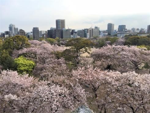 桜も…頑張っています(^_^)_d0082356_11174647.jpg