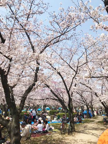 桜_e0251265_17002544.jpg