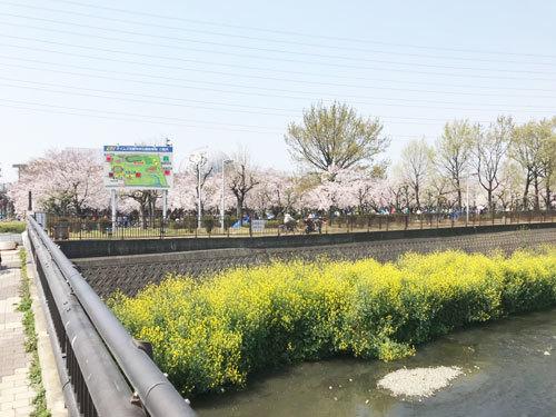 桜_e0251265_17002983.jpg