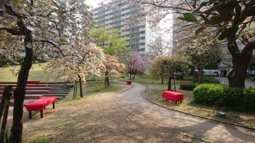 桜_f0228967_22000920.jpg