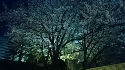 桜_f0228967_22001441.jpg