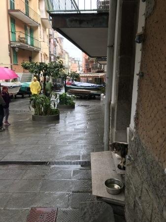 雨の日は猫見学_a0136671_03455522.jpg
