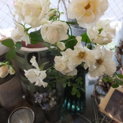 オークリーフ(新しい品種のバラ)_f0049672_18430825.jpg
