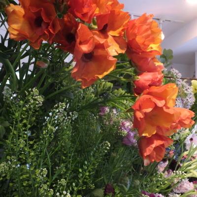 オークリーフ(新しい品種のバラ)_f0049672_18443869.jpg