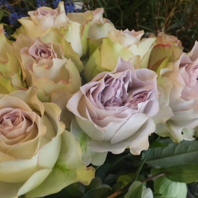 オークリーフ(新しい品種のバラ)_f0049672_18445637.jpg