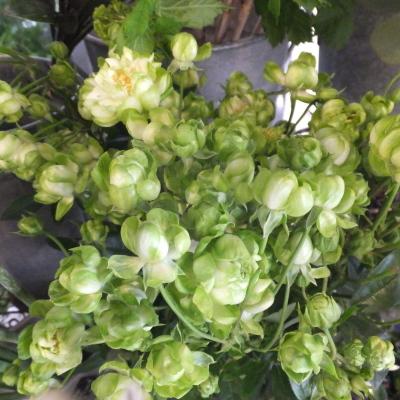 オークリーフ(新しい品種のバラ)_f0049672_18450130.jpg