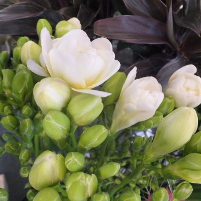 オークリーフ(新しい品種のバラ)_f0049672_18452833.jpg