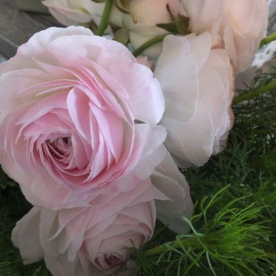 オークリーフ(新しい品種のバラ)_f0049672_18453962.jpg