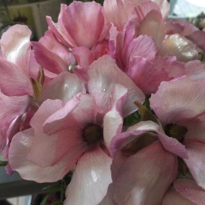 オークリーフ(新しい品種のバラ)_f0049672_18454356.jpg