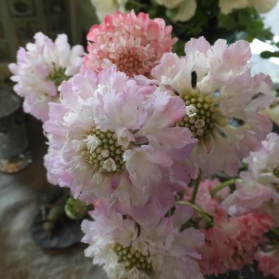 オークリーフ(新しい品種のバラ)_f0049672_18455003.jpg