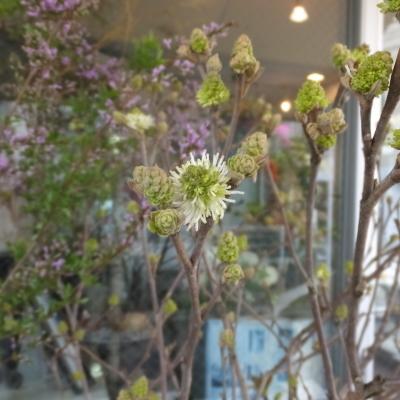 オークリーフ(新しい品種のバラ)_f0049672_18460148.jpg