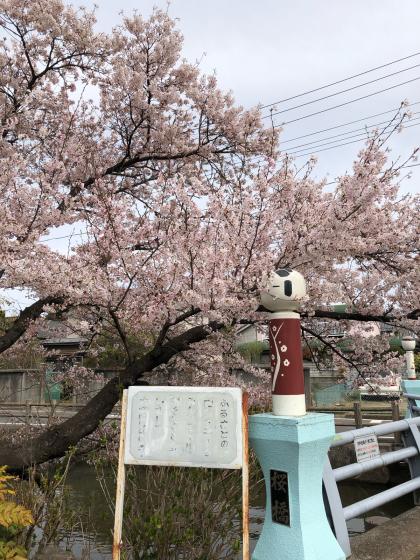 勝手に桜ツアー 白石散歩アプリコース①_e0355177_19392989.jpg