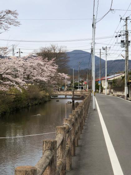 勝手に桜ツアー 白石散歩アプリコース①_e0355177_19542254.jpg