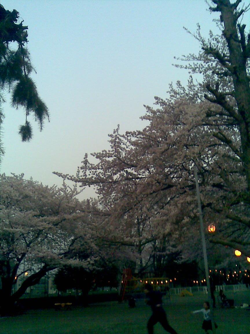 昨日ひとり花見時、ここは穴場、朝霞浜崎公園_d0061678_12404166.jpg