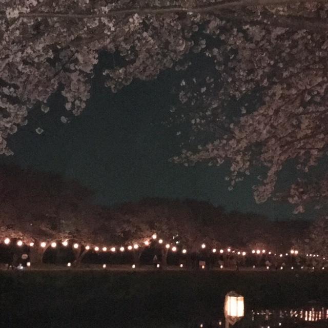 朝霞花見2019 黒目川夜桜 &ラーメン幻六_d0061678_19470601.jpg