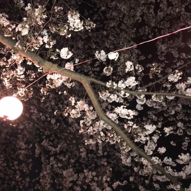朝霞花見2019 黒目川夜桜 &ラーメン幻六_d0061678_19545237.jpg
