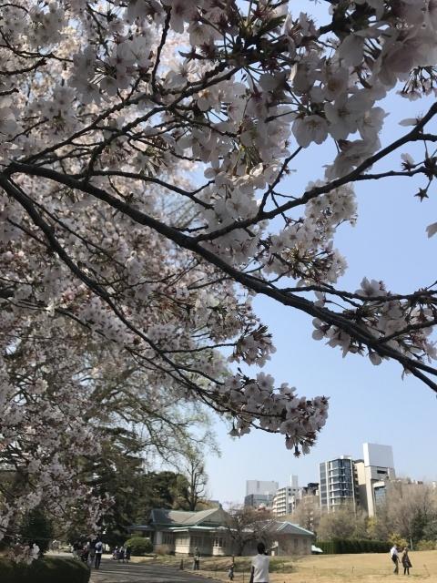 新宿御苑の桜_a0180279_13323832.jpg