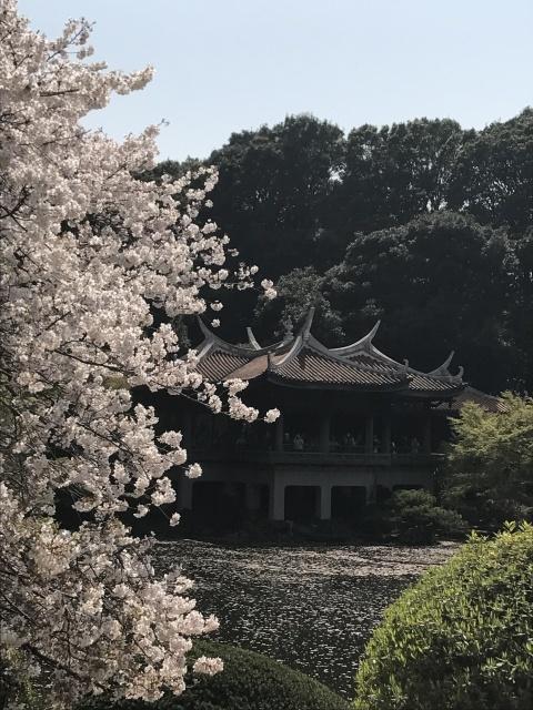 新宿御苑の桜_a0180279_13513039.jpg