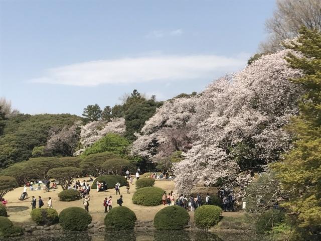 新宿御苑の桜_a0180279_13540795.jpg