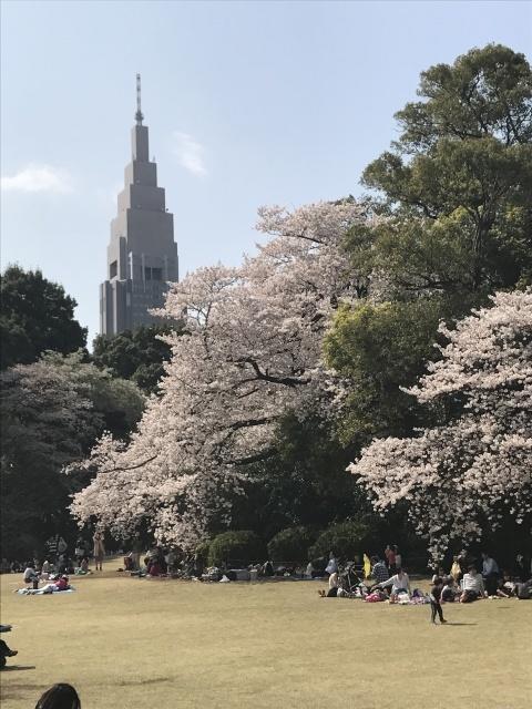 新宿御苑の桜_a0180279_13553714.jpg