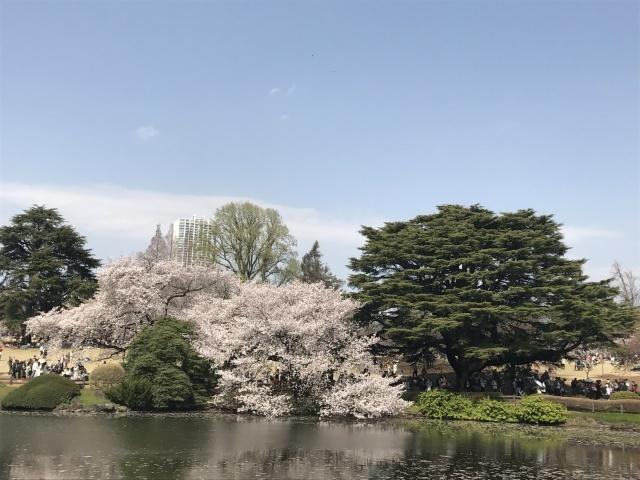 新宿御苑の桜_a0180279_13584673.jpg