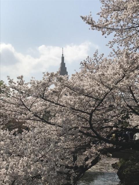 新宿御苑の桜_a0180279_14014329.jpg