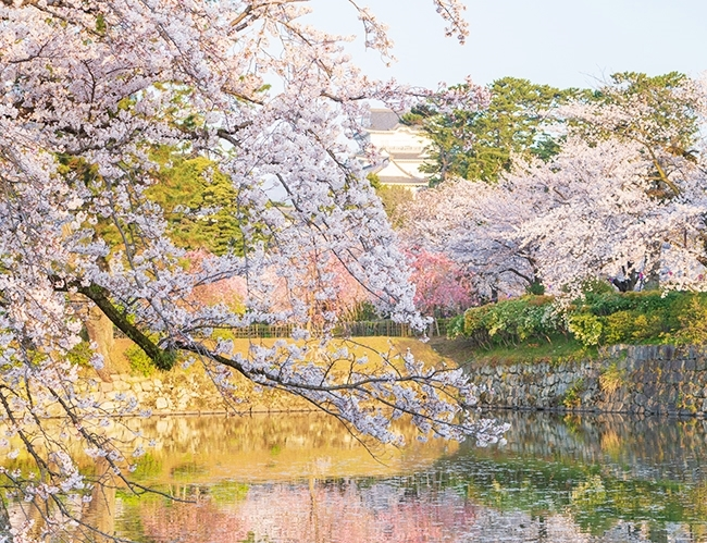 小田原城址公園の桜が満開でした_b0145398_00195090.jpg