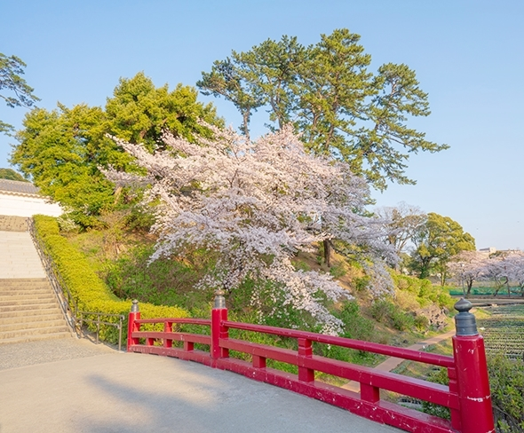 小田原城址公園の桜が満開でした_b0145398_00201580.jpg