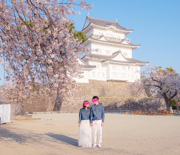 小田原城址公園の桜が満開でした_b0145398_00203034.jpg