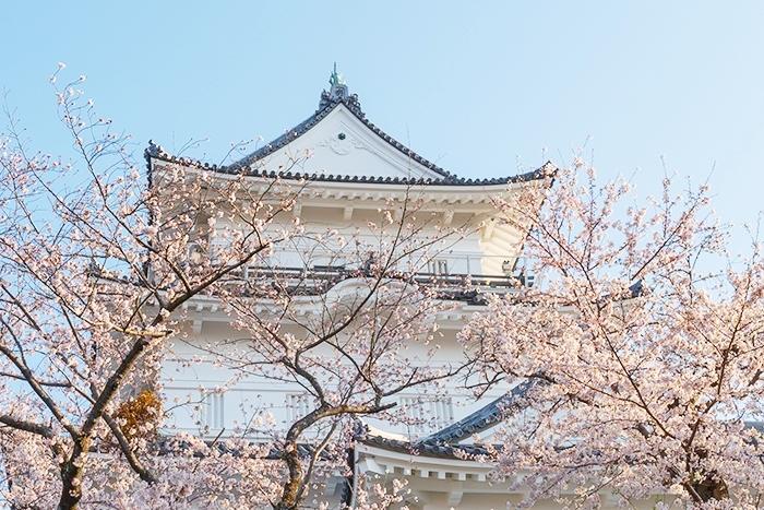 小田原城址公園の桜が満開でした_b0145398_00210238.jpg