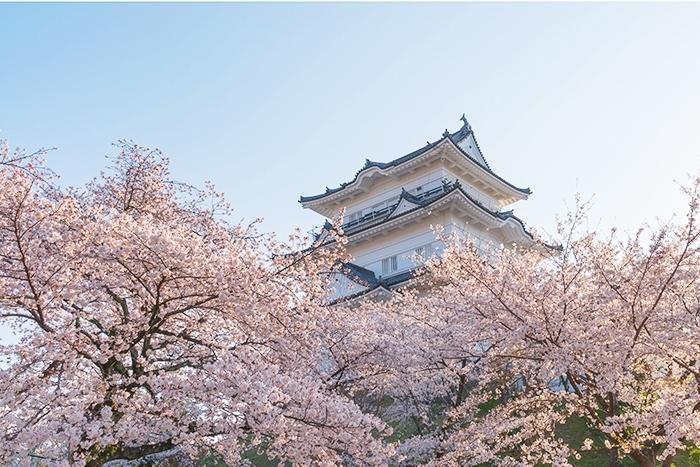 小田原城址公園の桜が満開でした_b0145398_00212070.jpg