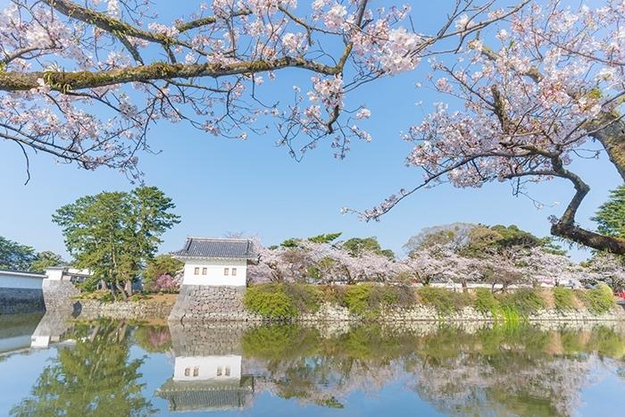 小田原城址公園の桜が満開でした_b0145398_00232771.jpg