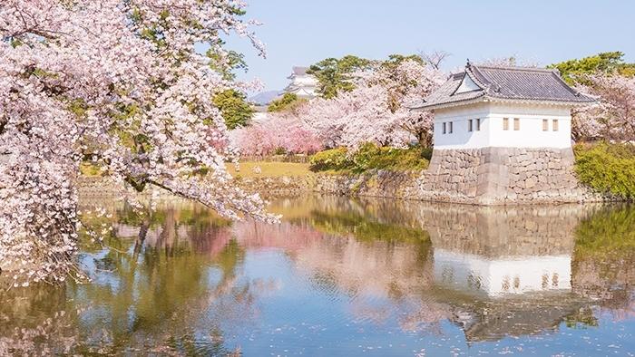 小田原城址公園の桜が満開でした_b0145398_00240917.jpg