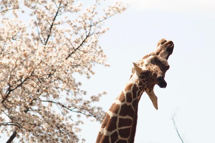 ようやく動物園2019_b0016600_20263023.jpg