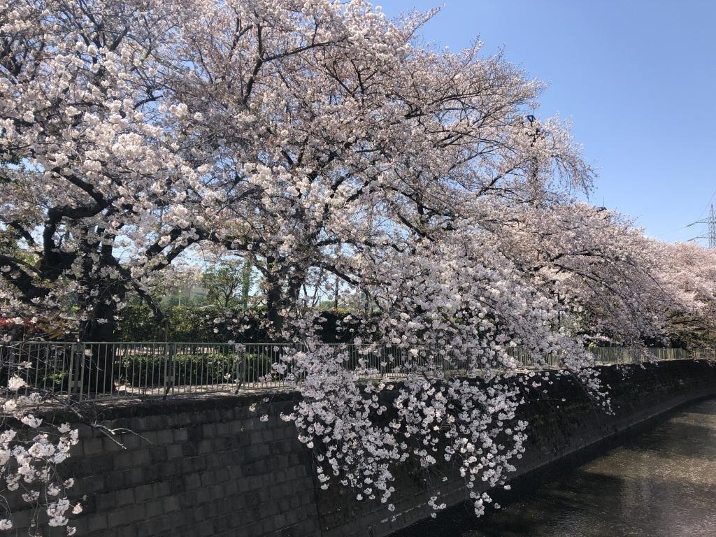 桜の中で3年目の入学式_c0042704_21371243.jpg