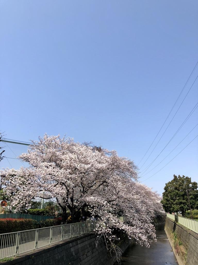 桜の中で3年目の入学式_c0042704_21373027.jpg