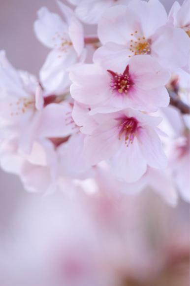 5月のご来店特典♪_b0340210_20083233.jpg