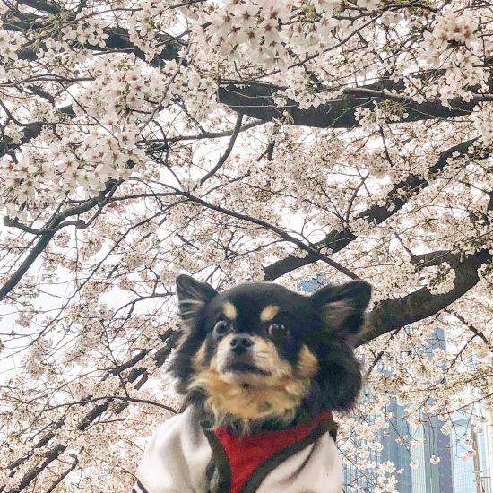 ご近所お花見散歩_f0197215_10263969.jpg