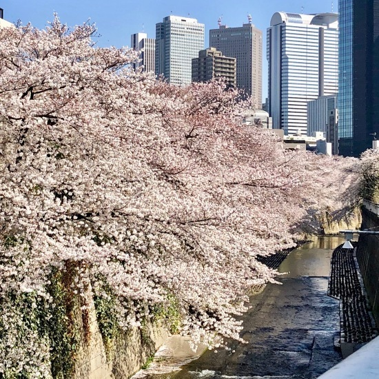 ご近所お花見散歩_f0197215_10264796.jpeg