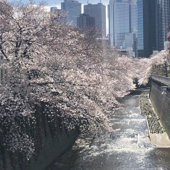 ご近所お花見散歩_f0197215_10264803.jpg