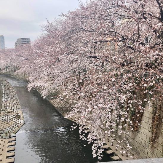 ご近所お花見散歩_f0197215_10265480.jpeg