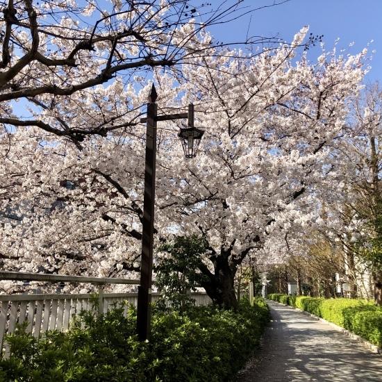 ご近所お花見散歩_f0197215_10265977.jpg