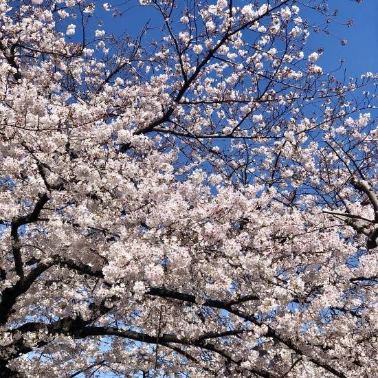 ご近所お花見散歩_f0197215_10270062.jpg